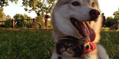Husky z kotkiem