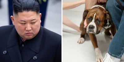 Kim Jong Un und ein Hund
