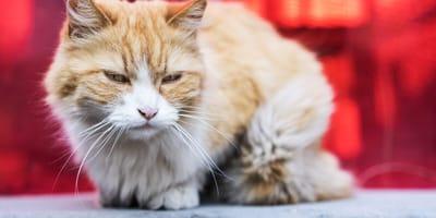 gato amarillo ventana