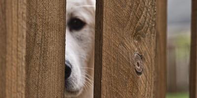 cane dietro staccionata