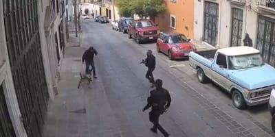 perro policia es lesionado en accion