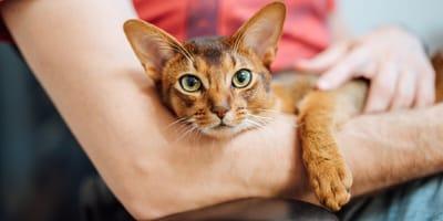 Nadczynność tarczycy u kota - objawy i leczenie