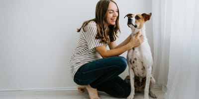 Why use a pet sitter?
