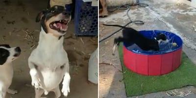 perro salta y perro se mete en piscina