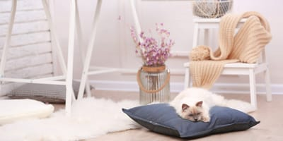 Ventajas e inconvenientes de vivir con un gato en una casa pequeña