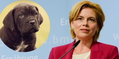 brown puppy in yellow circle, political woman speaking in front of light blue background