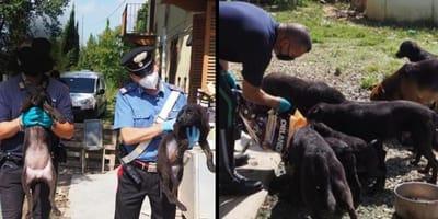 polizia e guardie zoofile con cani in braccio / poliziotto nutre cani
