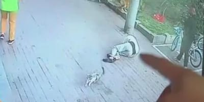 uomo a terra con gatto che scappa