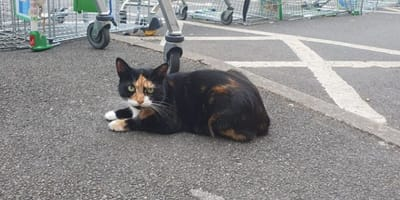 "Locals call for memorial to remember beloved ""Asda Cat"""
