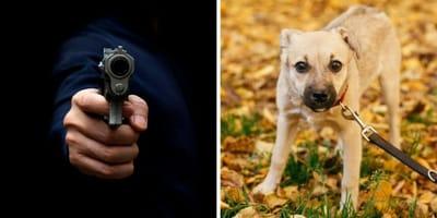 Waffe und Hund nebeneinander
