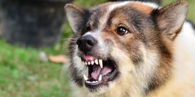 ¿Qué hacer si mi perro mordió a una persona? Estos son los pasos a seguir