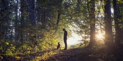 perro hombre bosque