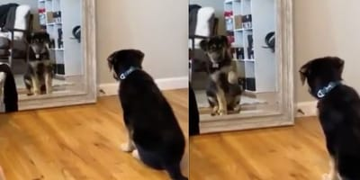 WATCH: Adorable pup practises making friends in the mirror!