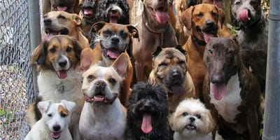 International Dog Day: Seven reasons why dogs are the best