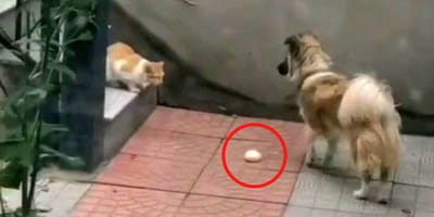 Der Hund legt das Essen auf den Boden.