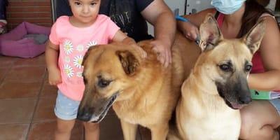 dos perros grandes adoptados por una nueva familia