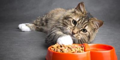 I 5 motivi per cui un gatto mangia ma è magro!