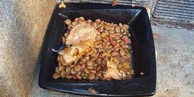Tierheim-Mitarbeiterin findet Teller mit Trockenfutter: Als sie daran riecht, rastet sie aus!