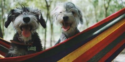 cani nell'amaca