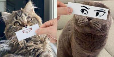 Cats given facial expressions
