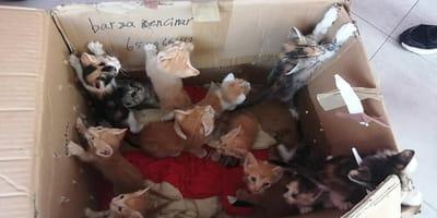 gatitos abandonados caja carton protectora scooby do