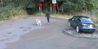 Kobieta wypuszcza swojego 13-letniego psa z samochodu, a potem robi coś, co nie mieści się w głowie [wideo]