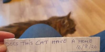 Kot wraca do domu z notatką: okazuje się, że prowadzi podwójne życie. I to jakie!