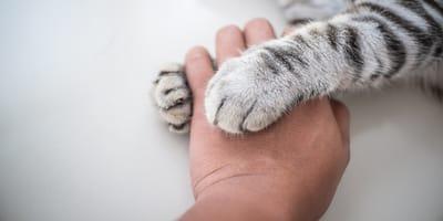 Uśpienie kota – jak wygląda i kiedy podjąć tę trudną decyzję?
