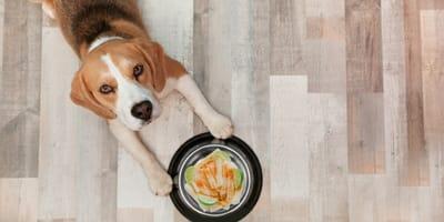 ¿Los perros pueden comer jícama?