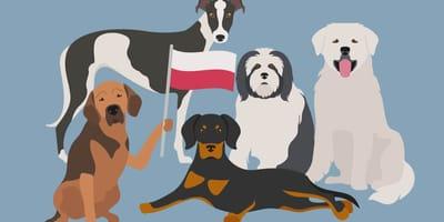 Karikaturen polnischer Hunderassen