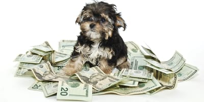 perro con dinero