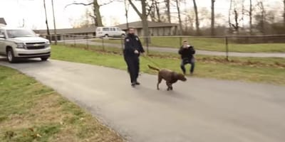 Chuckie the Labrador is led by a police man to his family