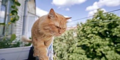 Come evitare che il gatto salga sulla ringhiera del balcone e cada?