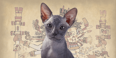 Gato azteca: descubre todo sobre este legendario minino