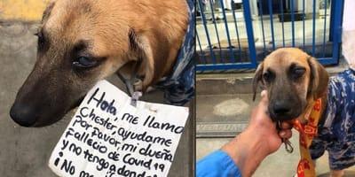 cane randagio con una nota