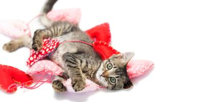 Los mejores juguetes de gatos para divertiros juntos