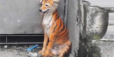 cane colorato come una tigre