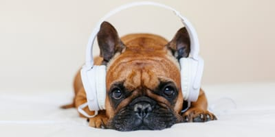 Musicoterapia para perros: ¡a tu perro le gusta la música!