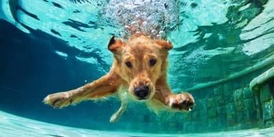 Hidroterapia para perros: beneficios inigualables para tu amigo