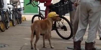 perro callejero casco