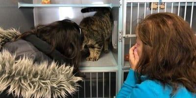gatto soriano all'interno di un rifugio si strofina contro una donna