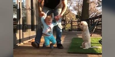 bambino che impara a camminare e cane con due zampe