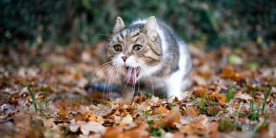 Recetas caseras para gatos con vómitos: consulta la dieta más sencilla y eficaz