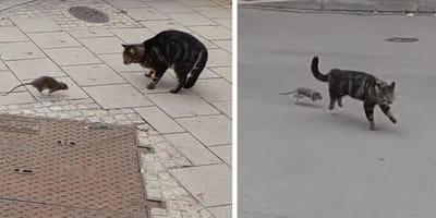 Kot rzuca się w pościg za szczurem: reakcja gryzonia wprawi was w osłupienie! (VIDEO)