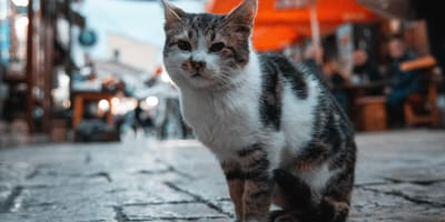 Bezpański kot na ulicy