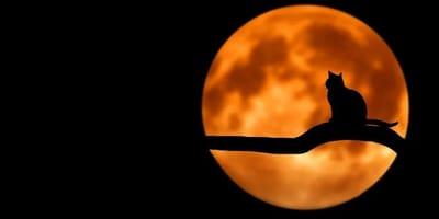 figura di un gatto davanti la luna notturna