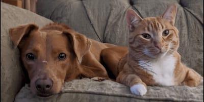 Pies jest smutny po wyjściu opiekunów: wtedy kot wpada na doskonały pomysł (VIDEO)