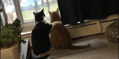 Kot boi się burzy: to, co robi jego brat jest wzruszające