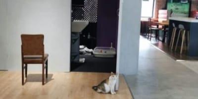 gato callejero en la oficina