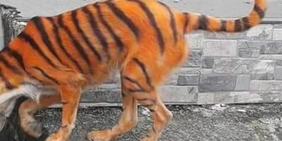 Pies przemalowany na tygrysa